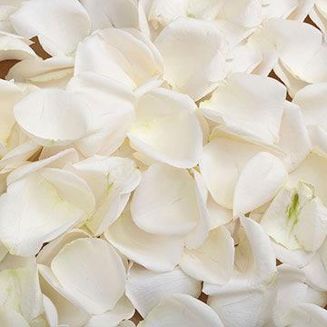 5000 Petals White