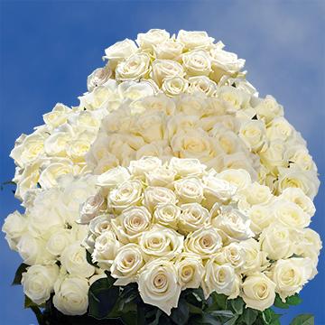 Luxury White Roses Globalrose