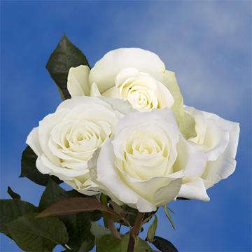 Flowers Roses Wedding Wholesale Online Send Birthday