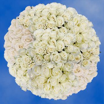 Luxury white roses global rose mightylinksfo
