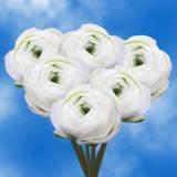100 White Ranunculus                                                              For Delivery to Roseburg, Oregon