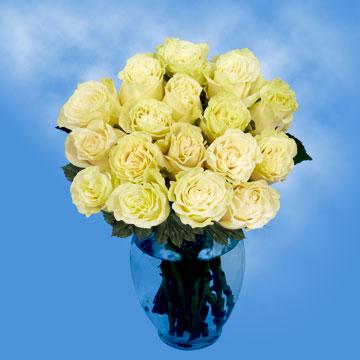 White Roses Mondial Roses for Sale Online