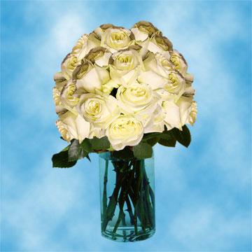 wholesale white roses mail order roses for wedding arrangements global rose. Black Bedroom Furniture Sets. Home Design Ideas